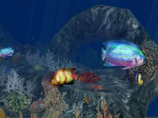 Download 3D Aquatic Life Screensaver: Fish!