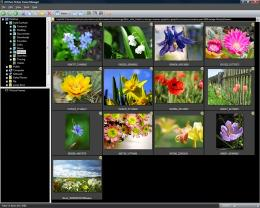 Download ACDSee Picture Frame Manager