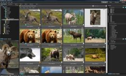 Download ACDSee Pro Photo Manager