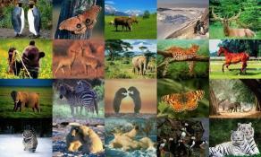 Download Animals Photo Screensaver Volume 1