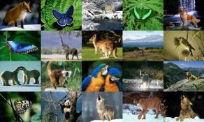 Download Animals Photo Screensaver Volume 2