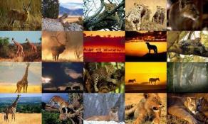 Download Animals Photo Screensaver Volume 4