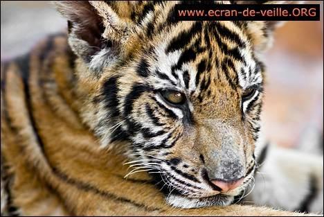 Download Animals Screensaver EV