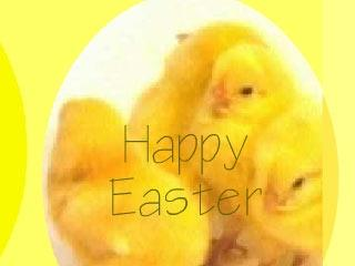 Download Animated Easter Chickens Screensaver