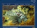 Download Aquarium Fish