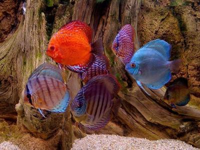 Download Aquarium Fishes Free Screensaver