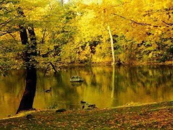 Download Autumn