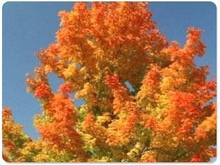 Download Beautiful Fall Thanksgiving Screensaver