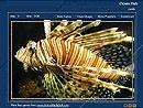 Download Beautiful Fish