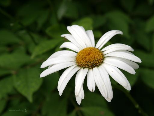 Download Beautiful Flowers