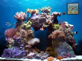 Download Beautiful Reef