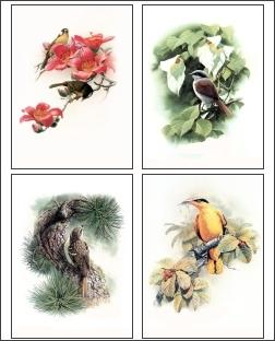 Download Bird Drawings 1 Screensaver
