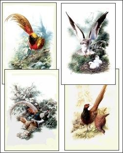 Download Bird Drawings 2 Screensaver