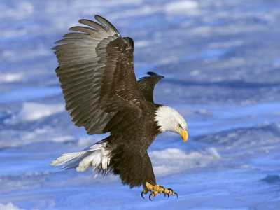 Download Birds of Prey Free Screensaver