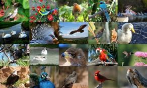 Download Birds Photo Screensaver