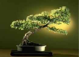 Download Bonsai Gallery Screensaver Collection