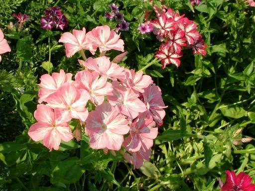Download Breathtaking Flowers Screensaver
