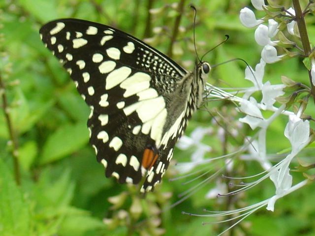 Download Butterflies Screensaver 2007