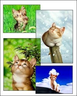 Download Cartoon Cats Screensaver 1