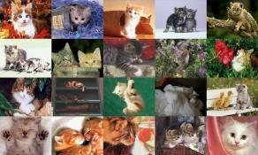 Download Cats Photo Screensaver