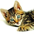 Download Cats Screensaver