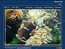 Download Clown Fish