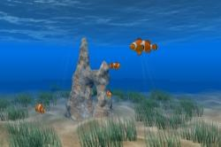 Download Clown Fish Screen Saver