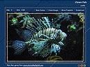 Download Colorful Fish