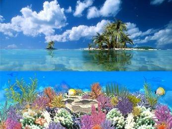 Download Coral Island