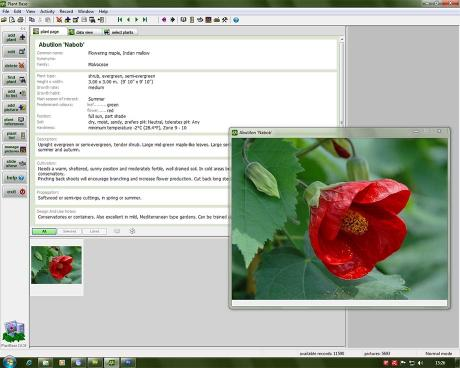 Download Deeproot Plant Base
