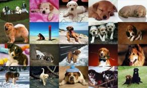 Download Dogs Photo Screensaver