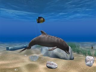 Download Dolphin Aqua Life 3D Screensaver