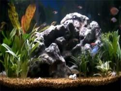 Download Fish Aquarium Video Screensaver