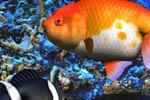 free 3d aqua screensaver