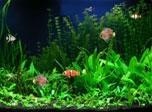 Download Free Aquarium Screensaver