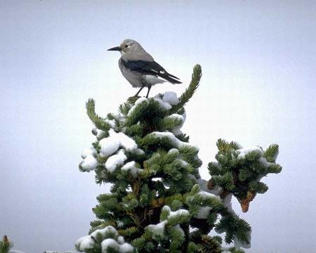Download Free Birds Screensaver