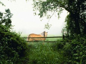 Download Horse in the Mist