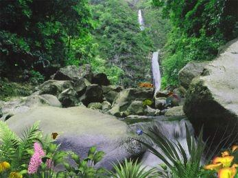 Download Jungle Waterfall