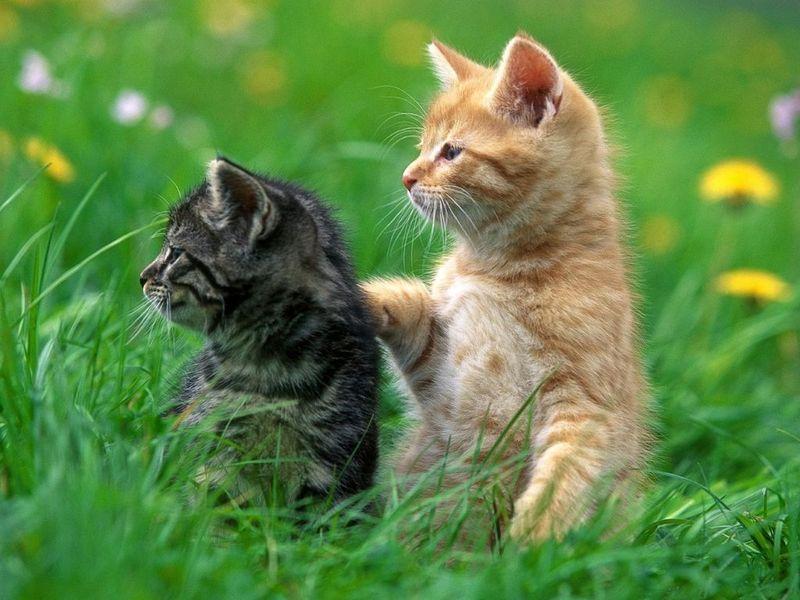 Free Funny Screensavers 2: Kittens Free Screensaver