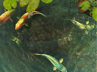 Download Koi Fish 3D Screensaver