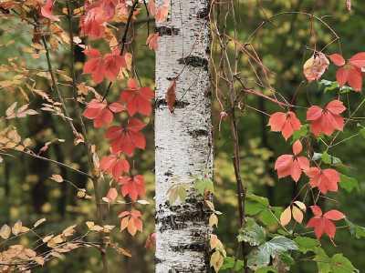 Landscape of Autumn HD Live Wallpaper