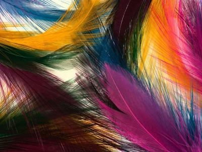 Download Nice Feathers Free Screensaver