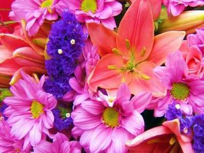 Download Nice Flowers Free Screensaver