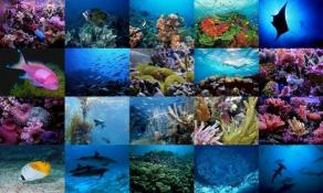 Download Ocean Life Photo Screensaver