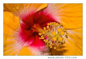 Download photo-555.com Album 5 Screensaver