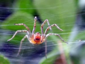 Download Spider Phobia Screensaver