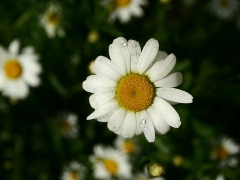 Spring Flowers Screensaver Standaloneinstaller
