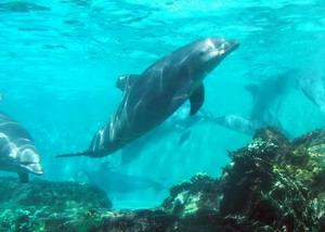 Download Tenerife Dolphins Screensaver