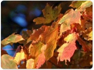 Download Thanksgiving Appreciation Screensaver