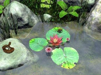 Download Water Lily 2